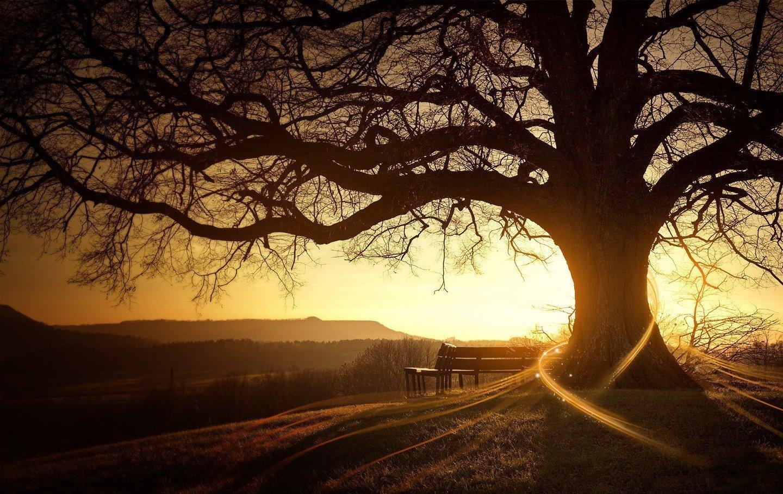 sunset-glow-trees-beautiful